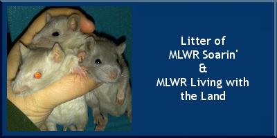 Litter of MLWR Soarin' x MLWR Living with the Land